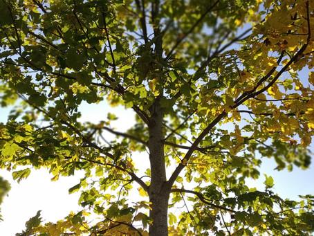 Grenar på livets träd