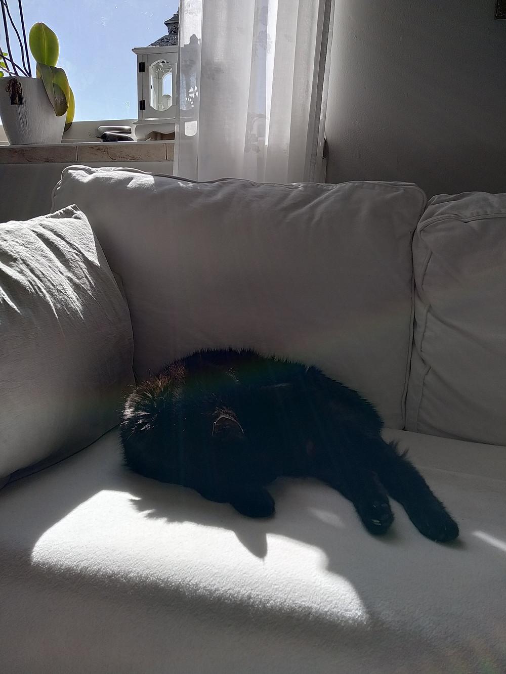 Katten Snäckan lapar sol i soffan