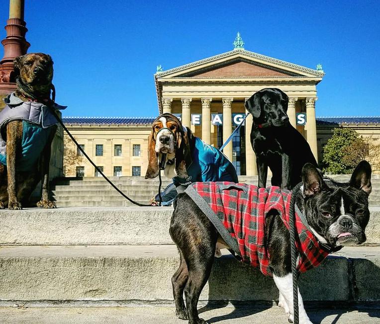 philadelphia dog walking, dog walking, dog walker, philadelphia dog walker