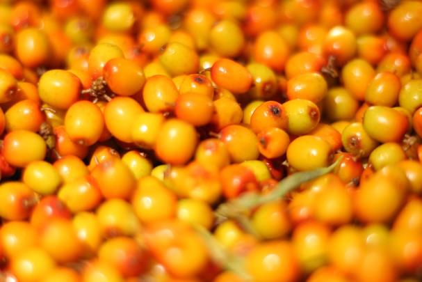 Fresh Sea buckthorn berries from Les Jardins d'Ambroisie