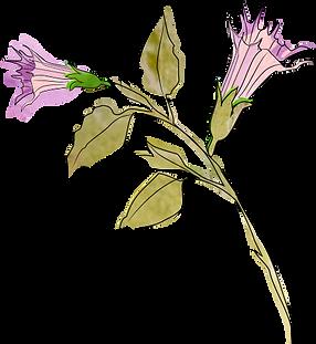 fleur mauve.png