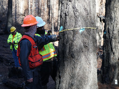 Keep an eye out for marked trees