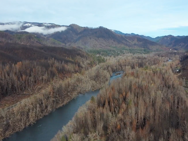 Video: McKenzie River Trust Rising from the Ashes
