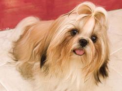 Beautiful+girl+favrit++dog+hd+Wallpapers[1].jpg