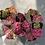 Thumbnail: Hortensia 6 stuks - Pink
