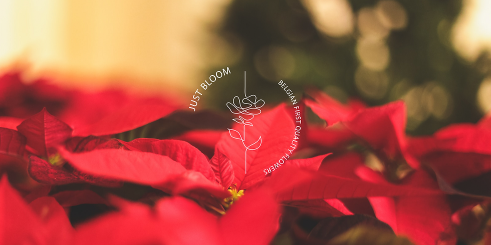 poinsettia banner.png