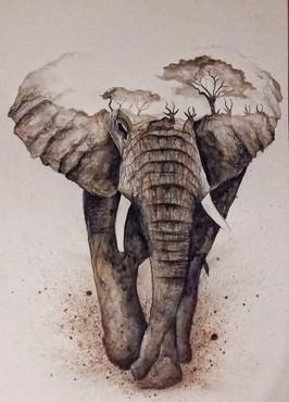 Eléphant et savane