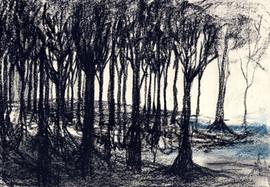 """""""Die Scheinwerferin # der Wald"""""""
