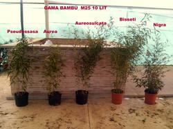 bambu25