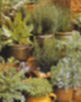 botanik2.jpg