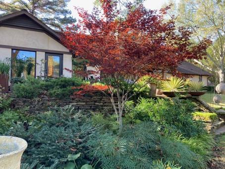 Fall 2020: Mother Nature's Art Festival