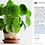 "Thumbnail: Pilea Peperomioides - ""Chinese Money Plant"""