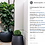 Thumbnail: Fiddle Leaf Fig