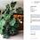 Thumbnail: Monstera Deliciosa - Philodendron