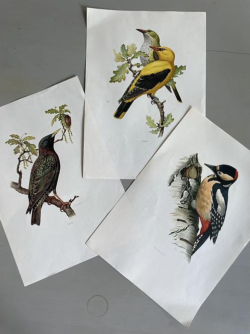 Tier Lehrkarten Vogel Set