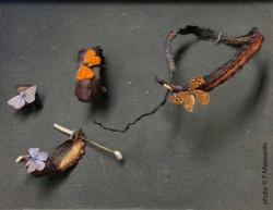 cuir de poulpe et papillon