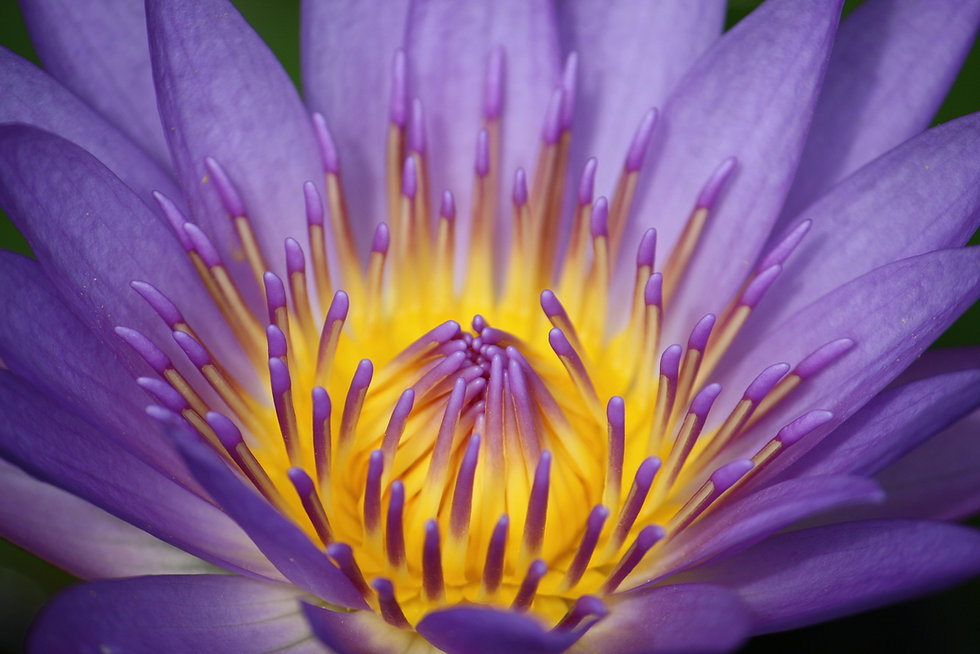 bigstock-A-Purple-And-Yellow-Colour-Wat-