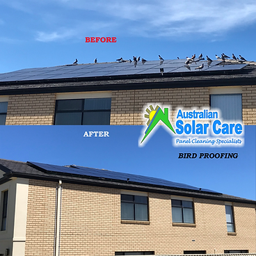 Adelaide Solar Panel Cleaning and Bird Proofing Specialists