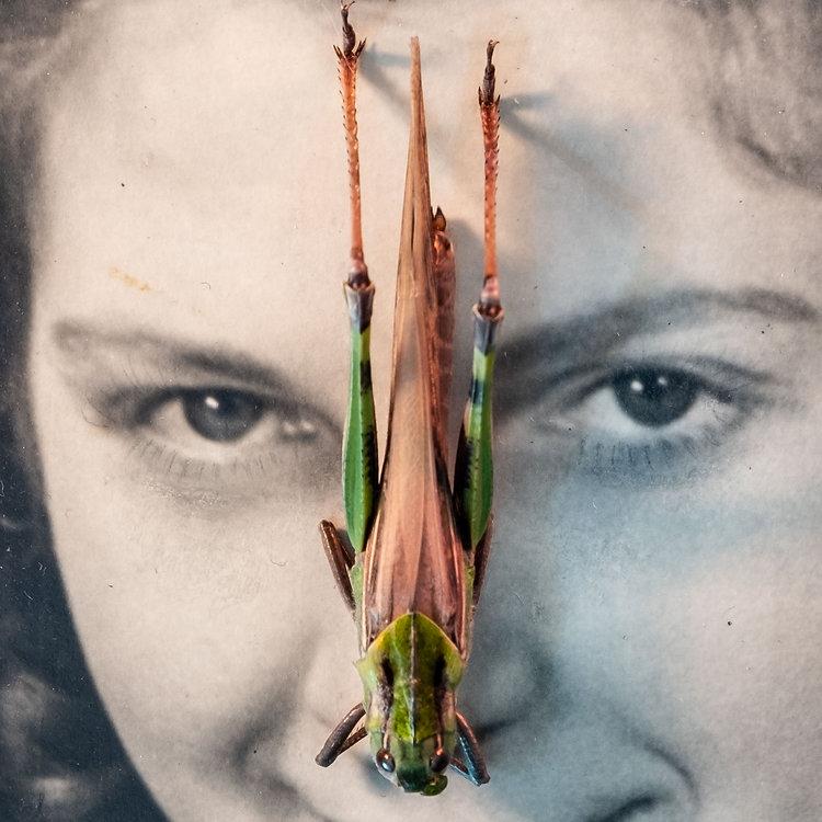 Saltamontesa-Margen-ocre-muestra-cara-PA