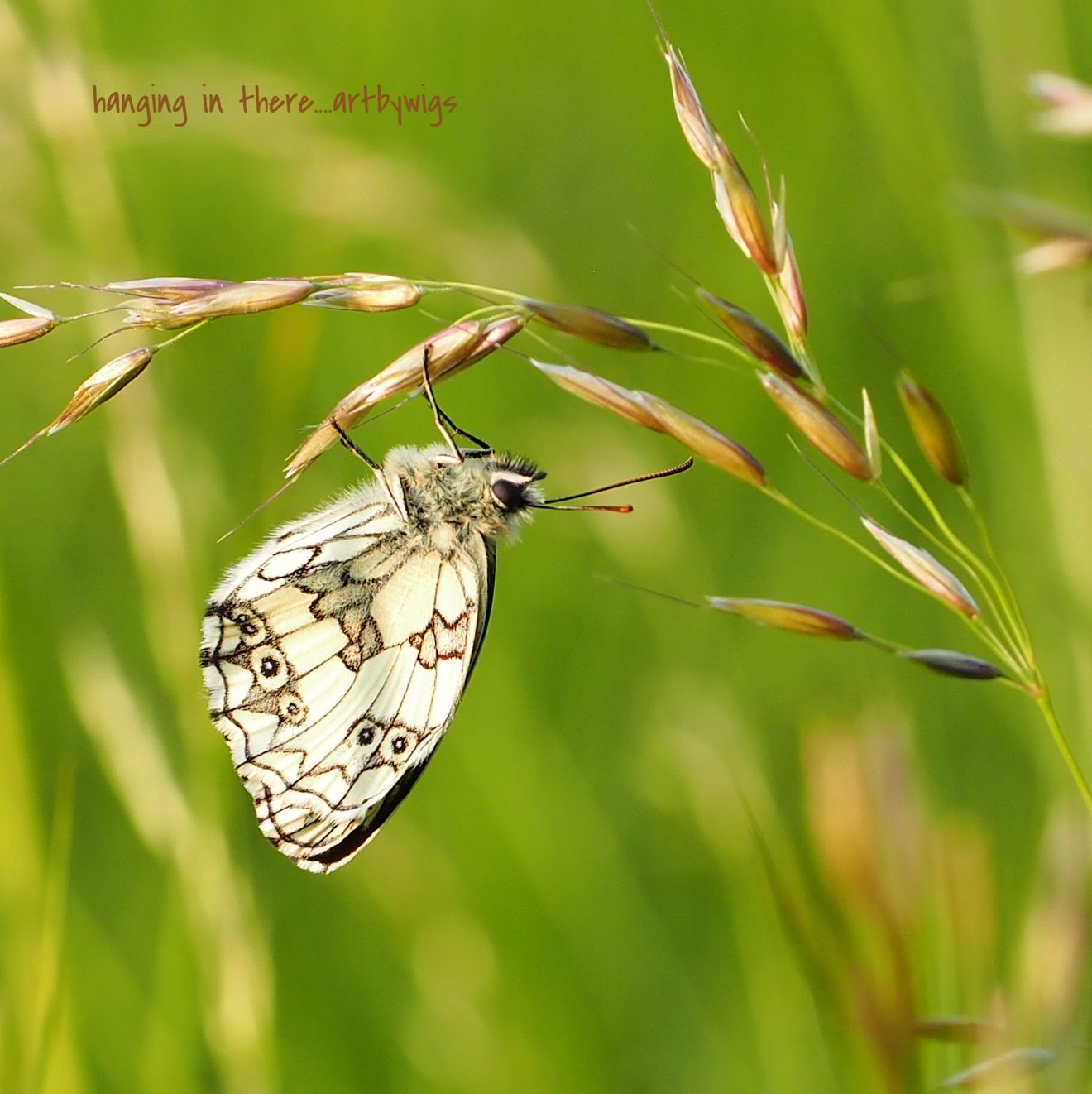 white marble butterfly
