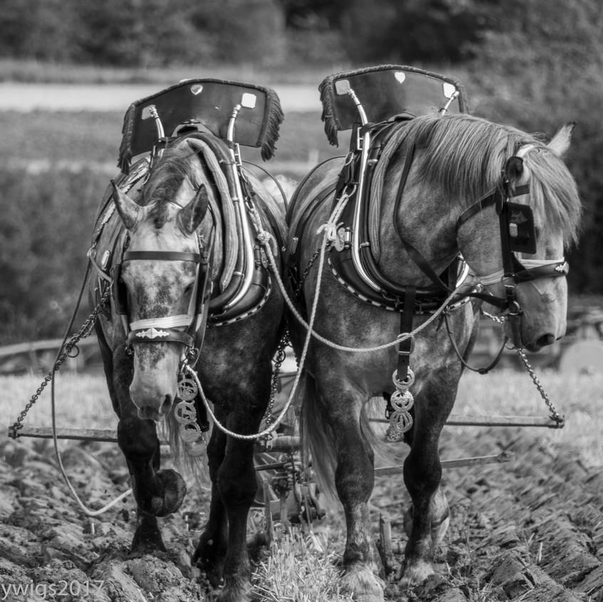 ploughing 2017 22-9160778