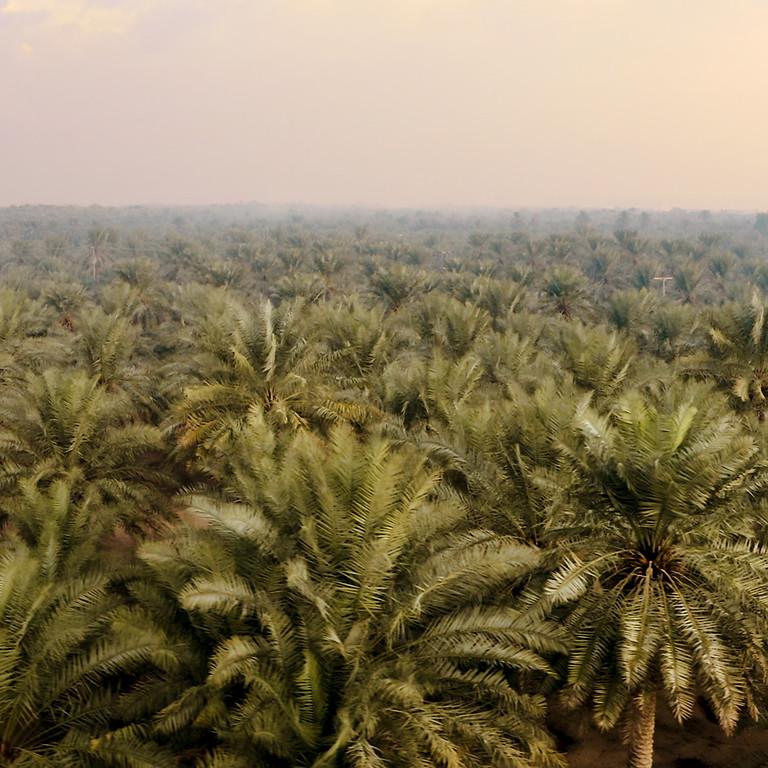 4 Days Al Ahsa Oasis Soul