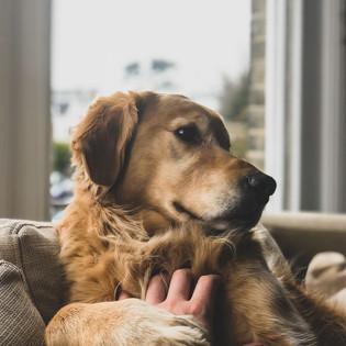 Pets @ Home