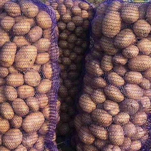 """Картофель продовольственный """"Коломбо"""""""