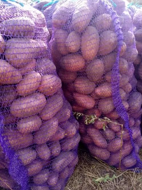 """Картофель продовольственный  """"Ред скарлет"""""""