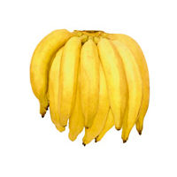 banana-terra.jpg