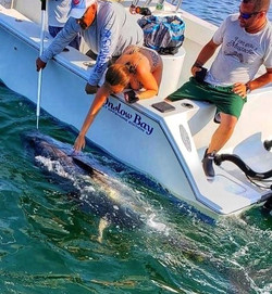 Swimming a monster bluefin before the re