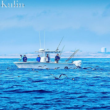 Cape cod, blue fin fishing, Top water