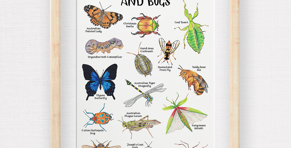 Australian Insects and Bugs Poster