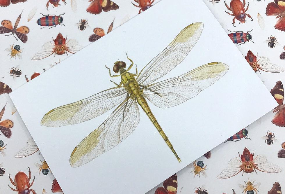 Blue Skimmer Dragonfly Greeting Card