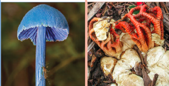 Pair of Guides: Mushrooms and Fungi of the Sunshine Coast