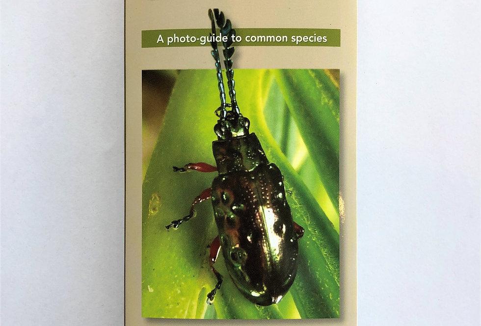 Beetles of Brisbane Field Guide