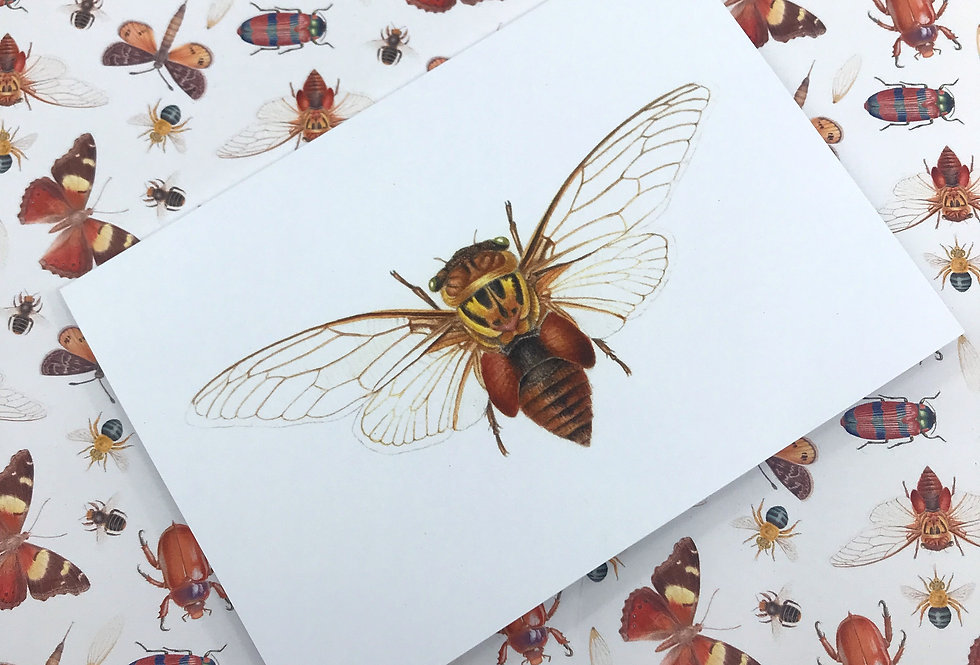 Double Drummer Cicada Greeting Card