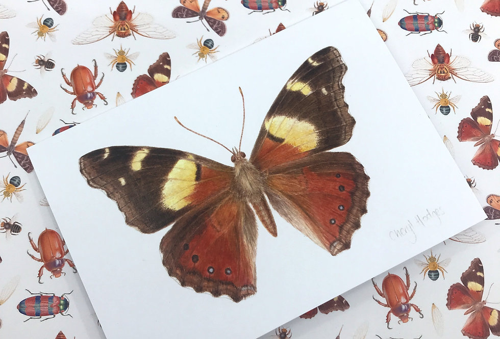 Yellow Admiral Butterfly Greeting Card