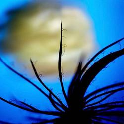 #photography _#植物 _#Plant