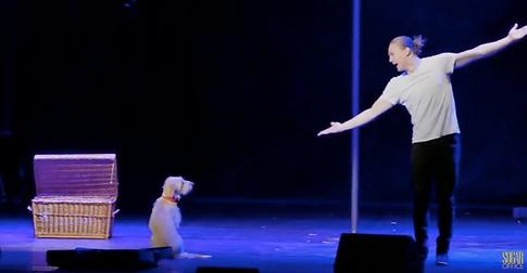 Hunde-Comedyshow, Künstleragentur Sugar