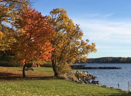 Beautiful Autumn Colours & Swedish Authors