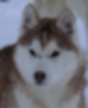 Puppy Hesd.jpg