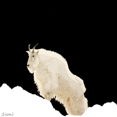 Rocky Mountain Climber