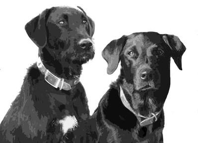 Bergian Pups