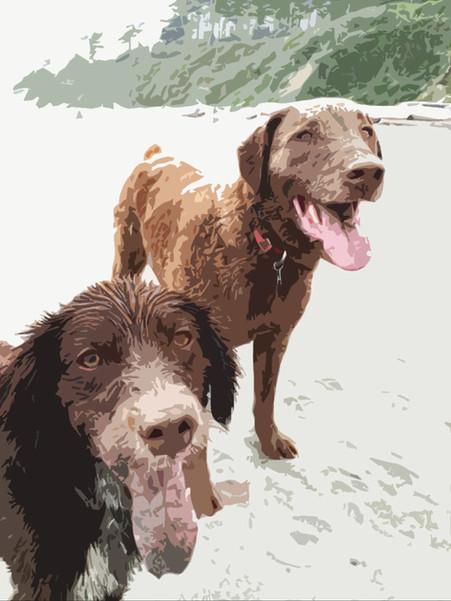 Rothermel Pups
