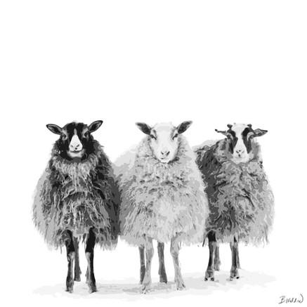 We Three Sheep