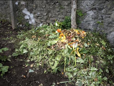 Cidadãos de Guimarães já podem calcular a sua pegada ecológica