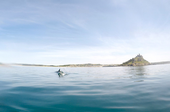 Dolphin Mounts Bay