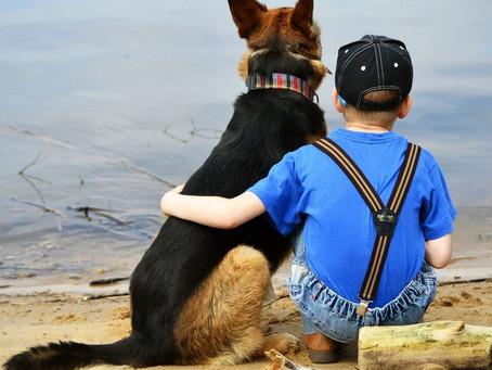 La communication avec votre chien : un art en soi!