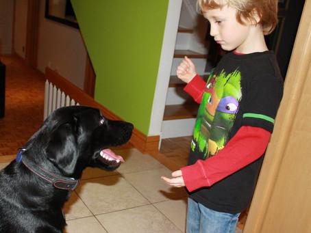 Les enfants et l'éducation de votre chien